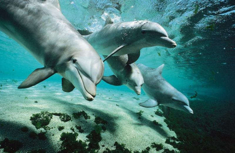 Дельфиньи ценности: дружба превыше всего