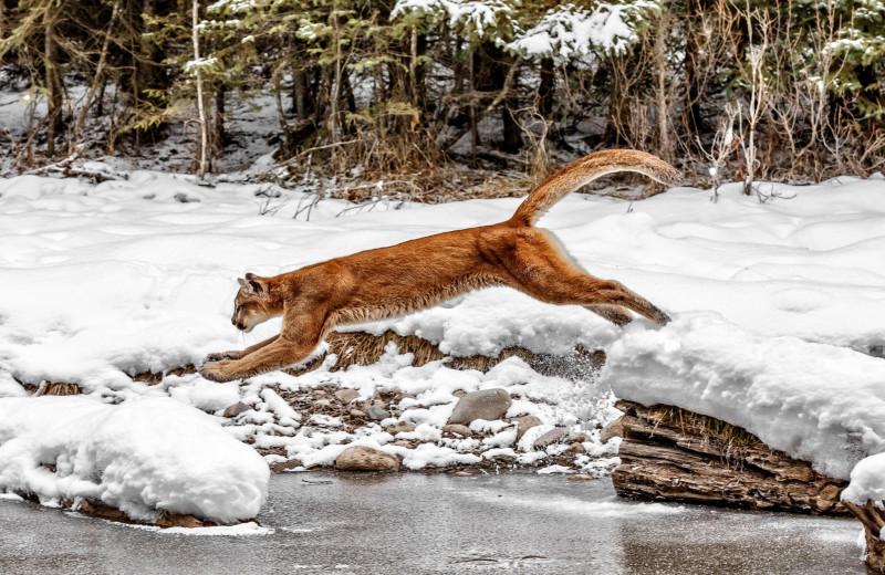 Разгон для слабаков: чемпионы живой природы по прыжкам в высоту