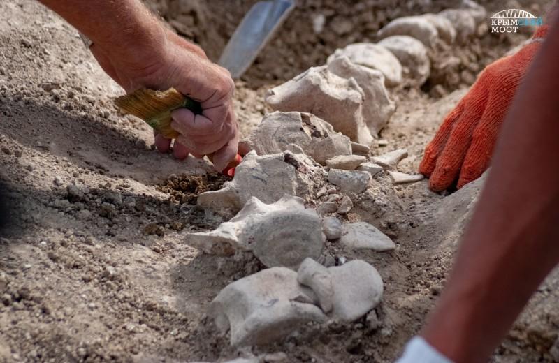В Крыму найден скелет древнего кита