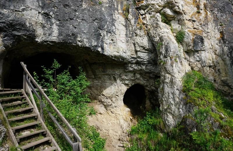 В Денисовой пещере в основном обитали гиены и волки