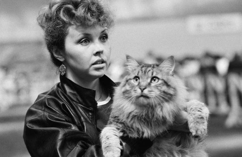 Когда вРоссии прошла первая выставка кошек?