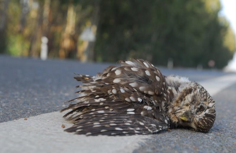 На дорогах Европы ежегодно погибает более 200 миллионов животных