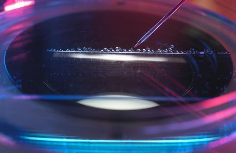 Одной крови. Как генетик из Гарварда создал приложение для знакомств, которое ищет пары на основе ДНК