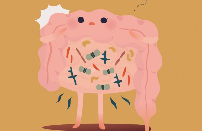 Заставляет толстеть, влияет на иммунитет: что нужно знать о кишечной микробиоте