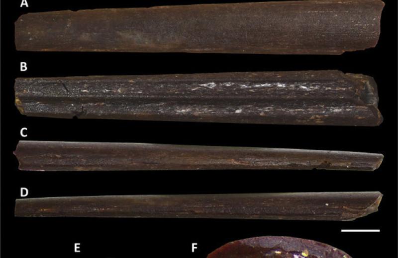 В Марокко нашли птерозавра с тонким беззубым клювом
