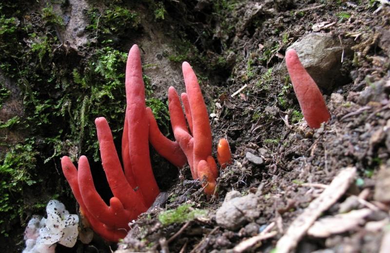 Один из самых смертоносных грибов Азии внезапно обнаружен в Австралии