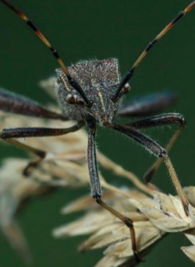 Хищнецы: профессиональные охотники на пауков