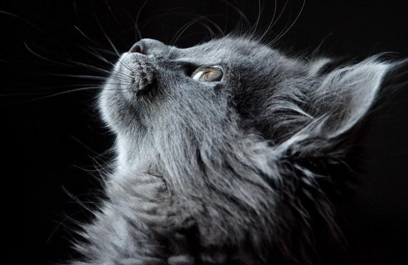 10 фактов о кошках: киприоты, пацифисты, полиглоты