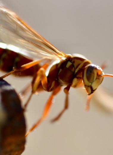 Палеонтологи описали древнейшее способное трещать крыльями насекомое