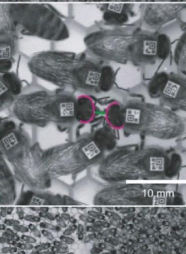 Вирус заставил пчел распространять его в чужих колониях