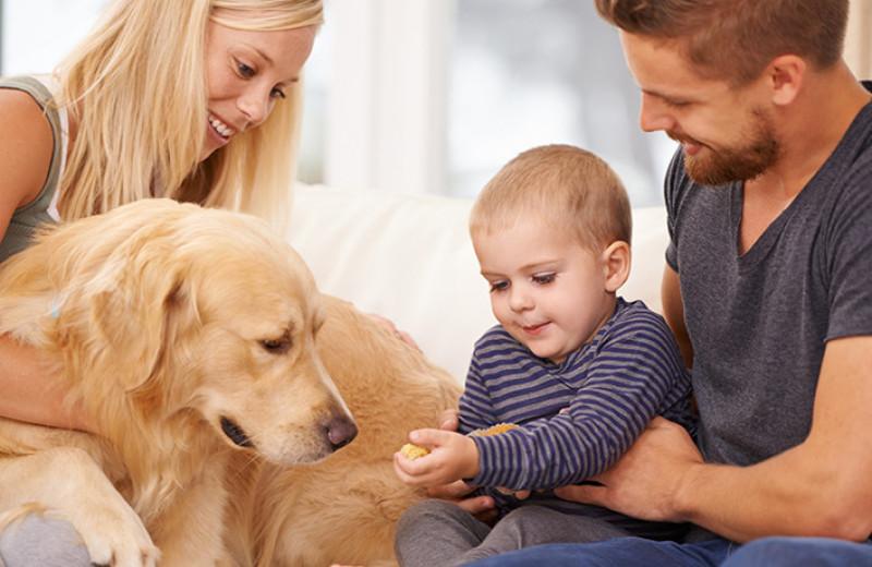 Если у вас ребенок и собака одновременно