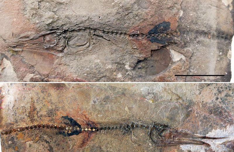 Как мальчик нашел скелет рыбы возрастом 90 млн лет