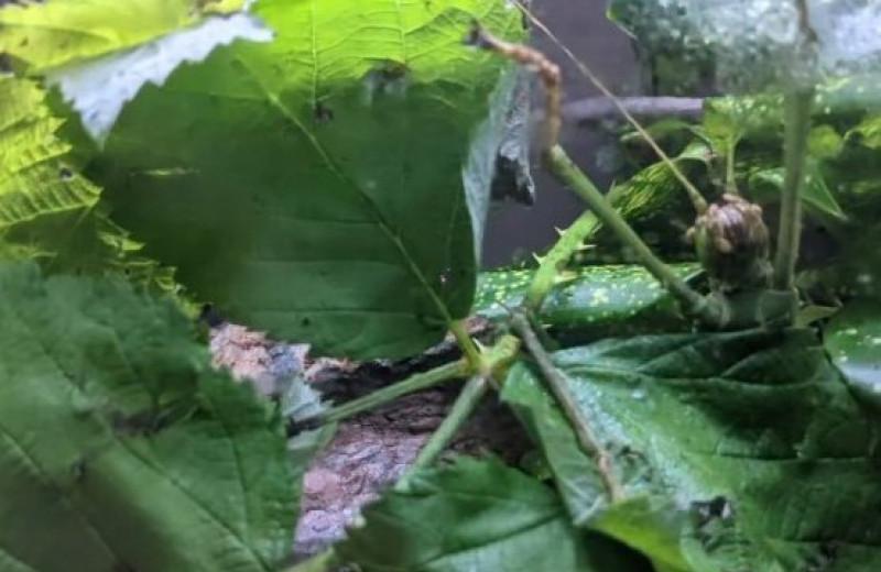 Найти насекомых на фотографии: загадка от Бронксского зоопарка