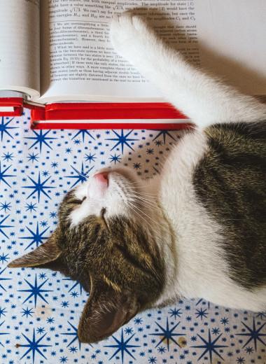 Физики научились превращать котенка Шредингера в кота и наоборот