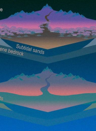 Манграм предрекли вымирание из-за антропогенного повышения уровня моря