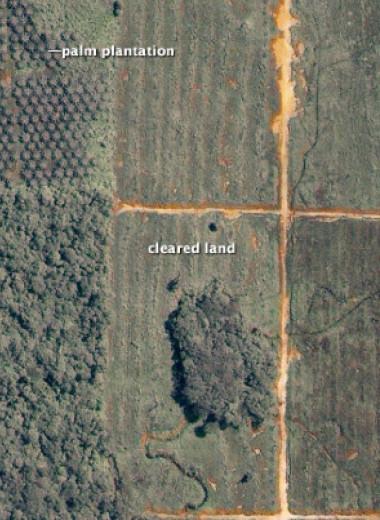 К 2050 году сельское хозяйство нарушит местообитания почти 90 процентов позвоночных