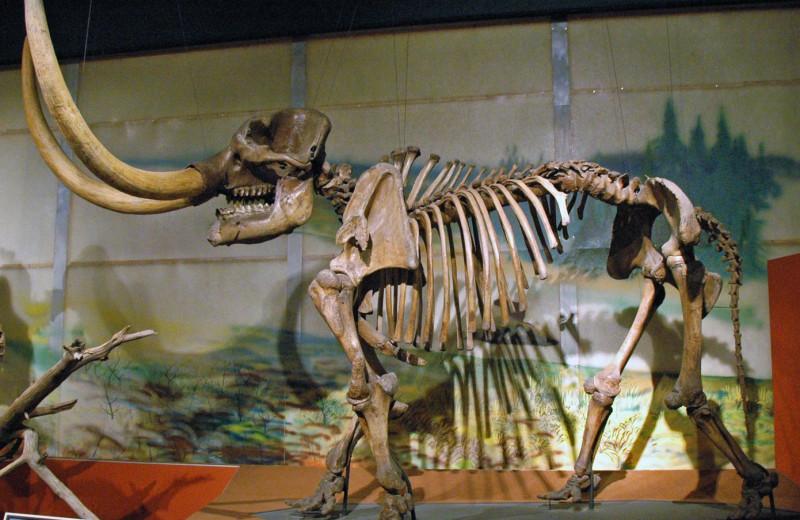 Мальчик нашел гигантский зуб мастодонта возрастом 12 000 лет