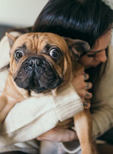 «Мама, папа и собака»: питомец как член семьи