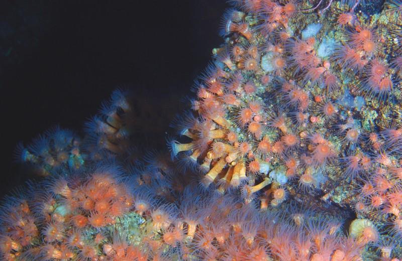 Кто живет на подводном вулкане