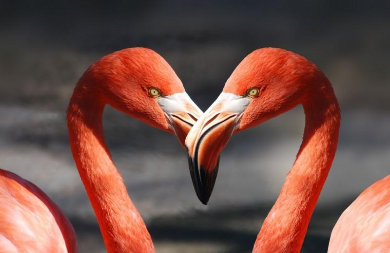 Розовая дружба: прочные отношения фламинго длятся годами