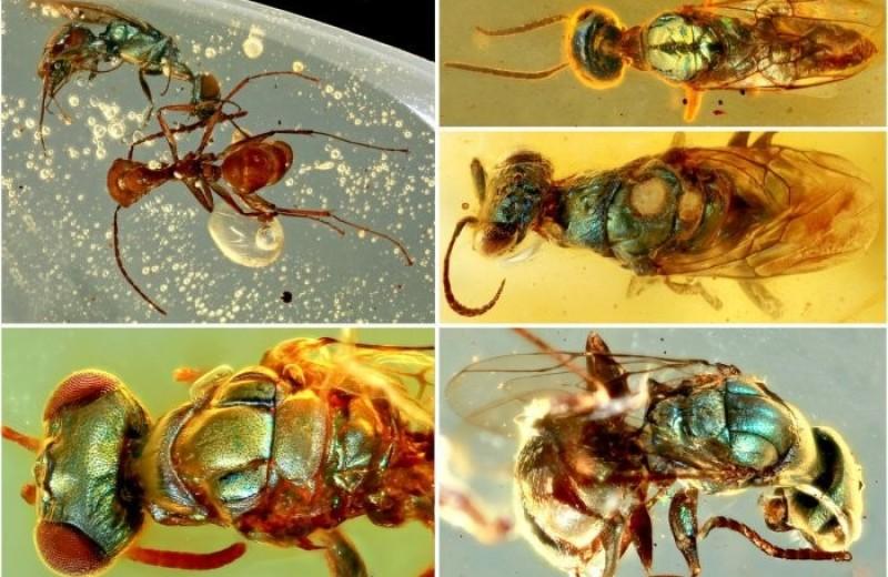 Завораживающие цвета насекомых сохранились в янтаре спустя 99 млн лет