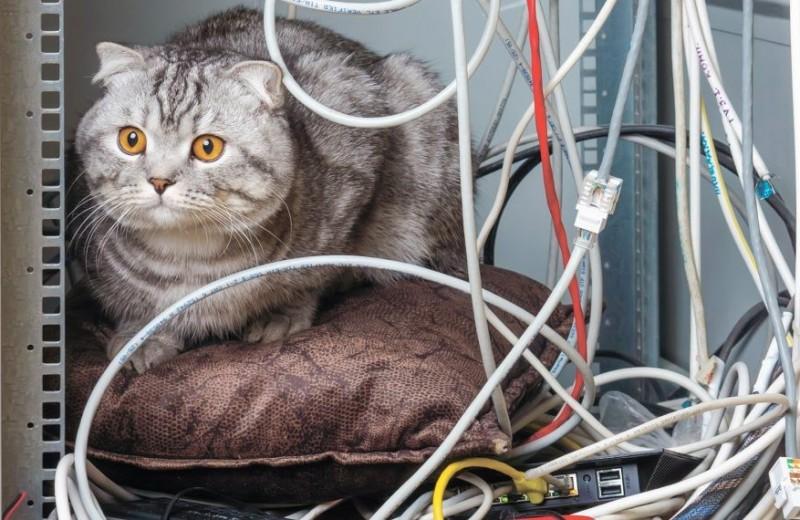 5 лайфхаков, как избавиться от надоедливых проводов