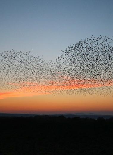 Орнитологи-любители помогли оценить численность 9700 видов птиц