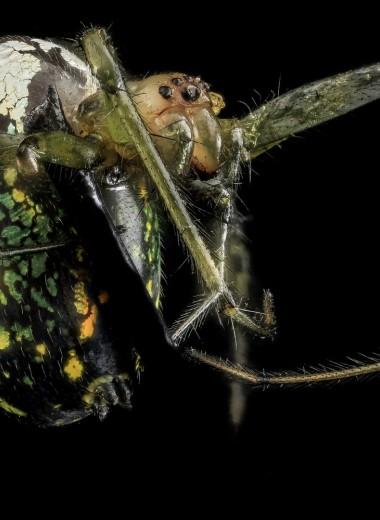 «Не доставайся больше никому»: жестокая любовь в мире пауков