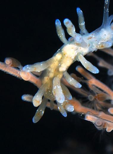 Ученые нашли у беломорских моллюсков необычный способ добывать пищу