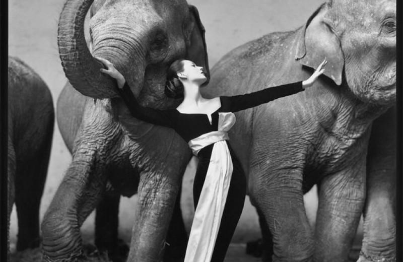 10 самых дорогих фотографий в истории