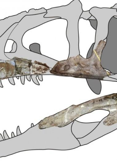 В Таиланде нашли останки гигантского динозавра с «акульими зубами»