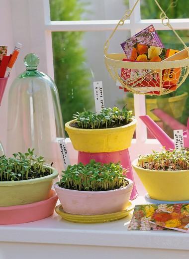 Посадка и выращивание рассады: 5 незыблемых правил