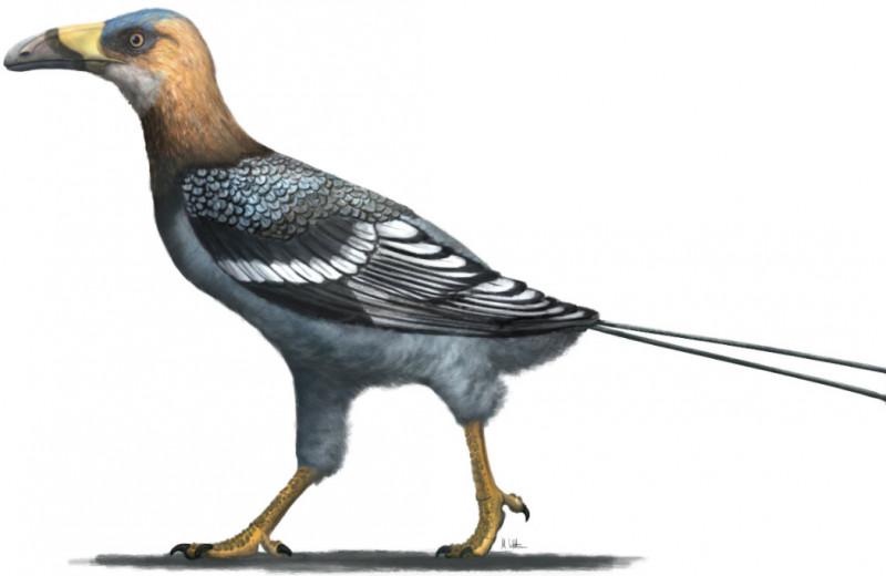 На Мадагаскаре нашли мезозойскую птицу с клювом тукана