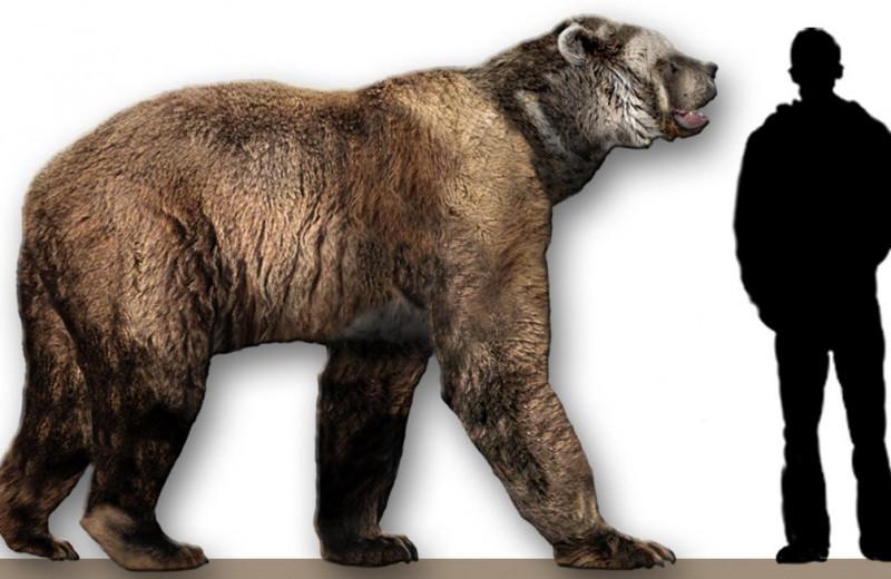 Ученые извлекли ДНК вымерших пещерных медведей из почвы