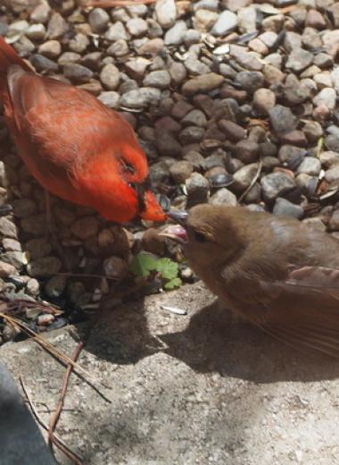 Певчие птицы прогнали птенцов из гнезда ради выживания выводка