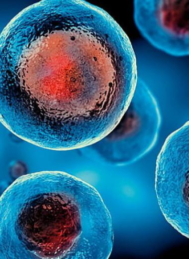 Клетки человека способны проникать даже в самые узкие каналы