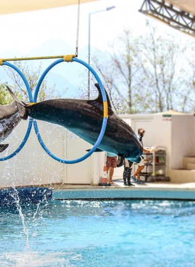 TripAdvisor объявил бойкот шоу с участием дельфинов и китов