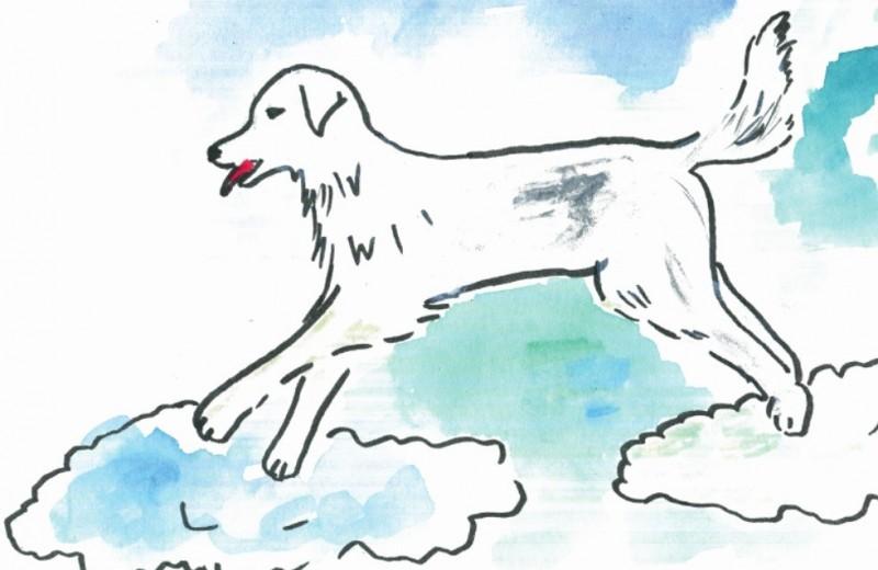 Татьяна Джанелидзе: Сказка для детей и взрослых о Большой Белой Собаке