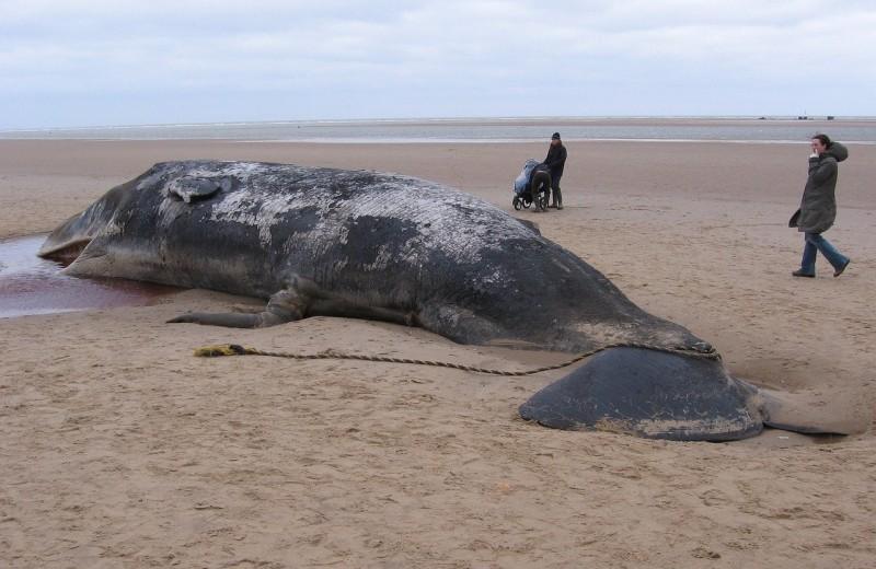 Раскрыты причины массовой гибели китов в Калифорнии