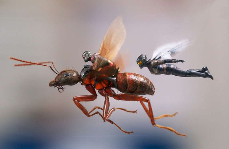 «Человек-муравей и Оса», «Небоскреб» и другие главные фильмы июля