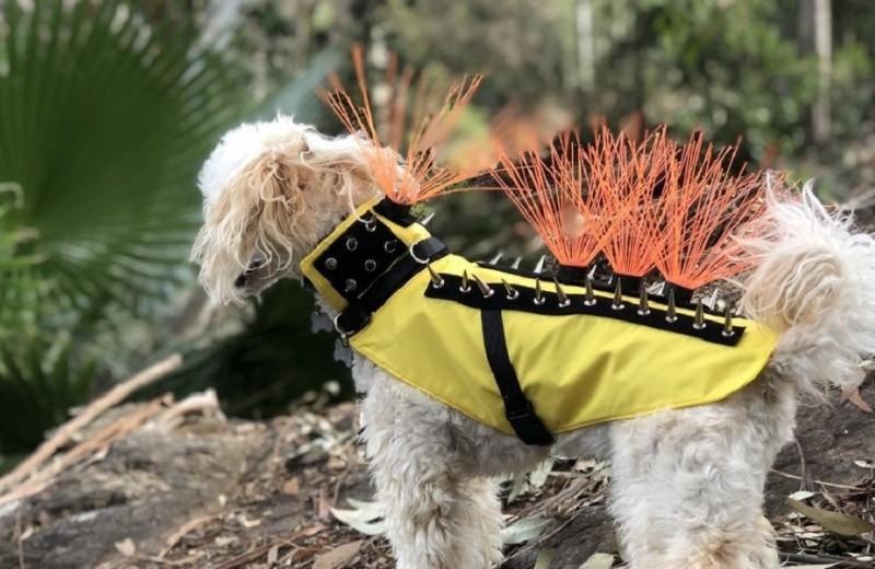 Жилет против хищника: как защитить пса от койота?