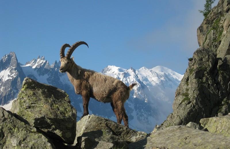 Монблан оккупировали «безумные» альпинисты. Президента Франции просят избавиться от них