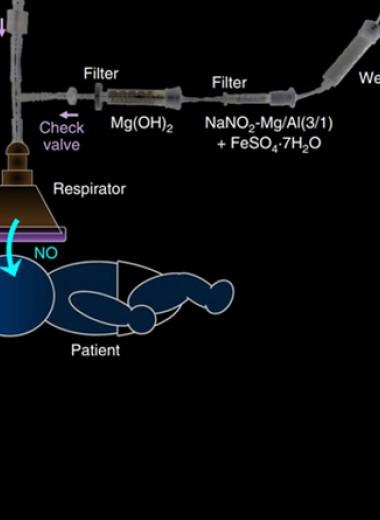 Слоистые двойные гидроксиды выделили сероводород и монооксид азота
