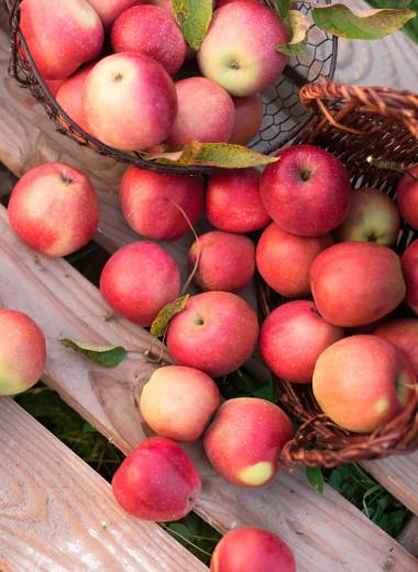 Яблочная диета: сбрось 10 кг за неделю!