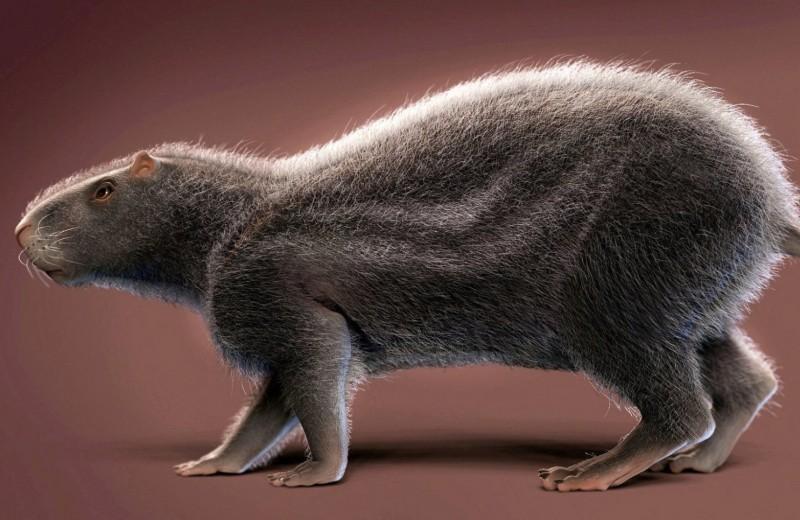 Останки 80-килограммовой древней крысы найдены в Амазонии