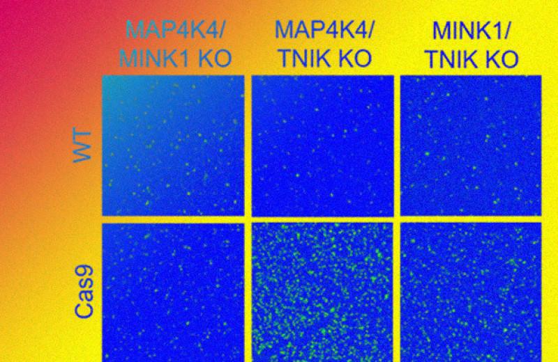 Выключение трех ферментов спасло нейроны от смерти