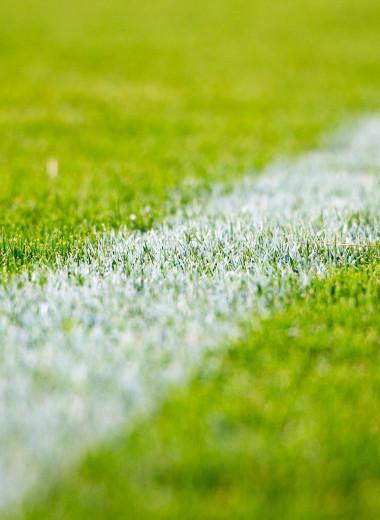 Футбольный ковер: приворотные травы