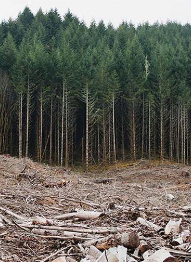 Как посадка деревьев может навредить природе, или 10 правил восстановления лесов