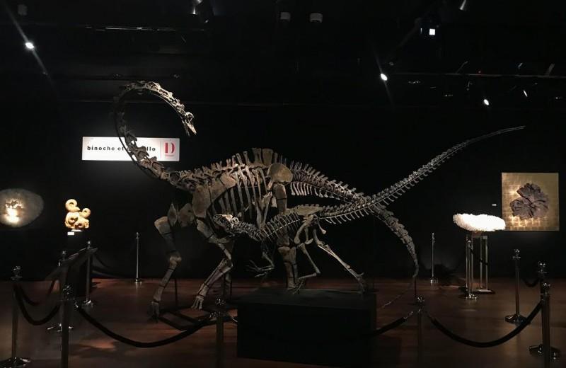 В Париже продаются скелеты двух динозавров