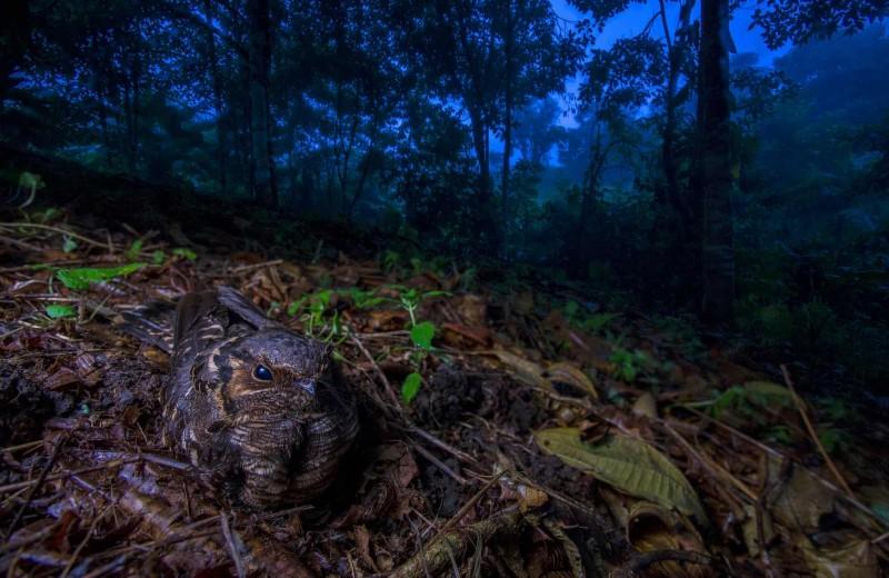 19 впечатляющих кадров дикой природы 2018 года